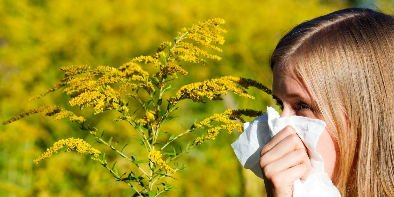 Girl sneezing into tissue in field of ragweed.